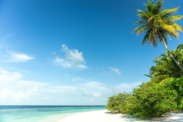Вид на мальдивы с кокосовой пальмой, чистая морская вода и голубое небо.