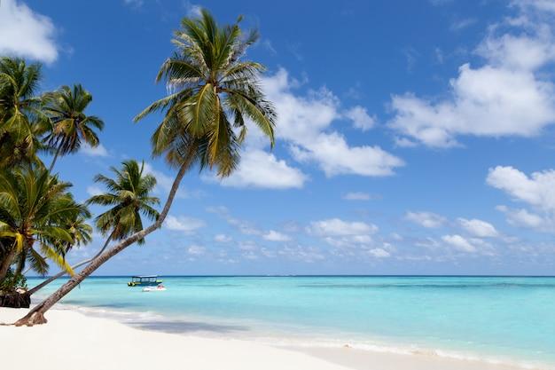 モルディブ、ヤシの木と海の景色と熱帯の島