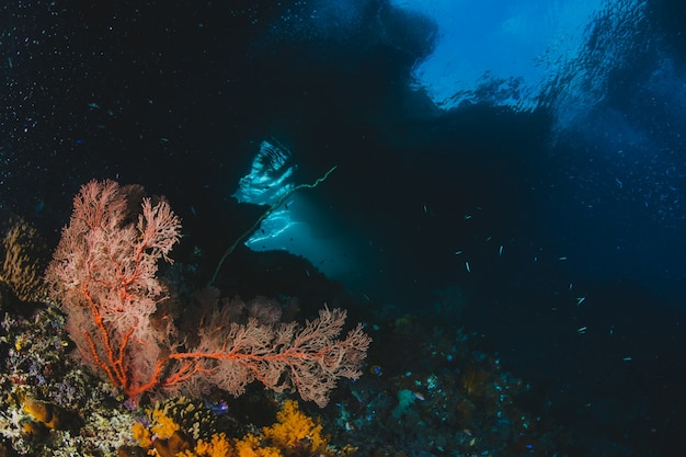サンゴとモルディブの海景