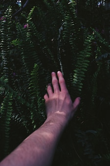 Male arm stretched into bushes touching green tropical exotic plants