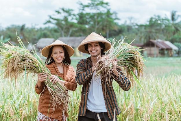 アジアの男性農家は収穫された稲を運び、女性農家は畑で一緒に収穫の頂点まで手を運びます