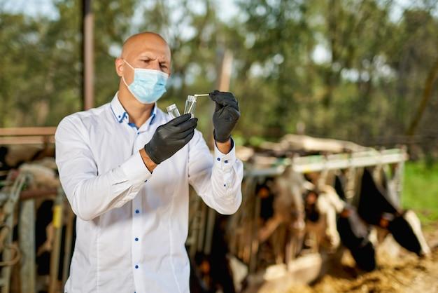 Ветеринар-мужчина коров на ферме берет анализы.