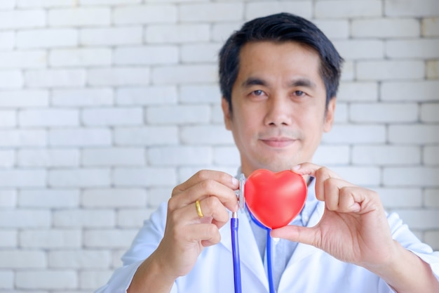 Male doctor holding red heart rubber model and checking.