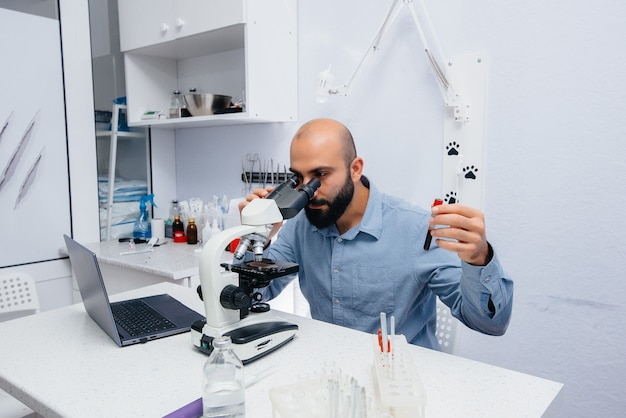 A male doctor in the laboratory studies viruses and bacteria under a microscope. research of dangerous viruses and bacteria.
