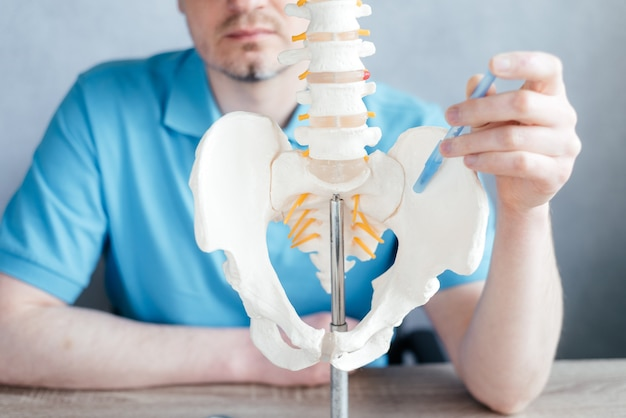 Male doctor's hand pointing at the sij sacroiliac joint on skeleton spine model close-up, physiotherapist pointing at spine model in the clinic