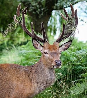 Самец лося в окружении травы и деревьев