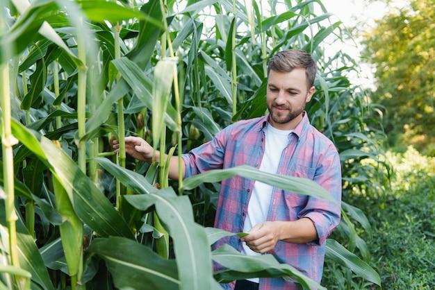 Фермер проверяет растения на своей ферме. концепция агробизнеса, сельскохозяйственный инженер, стоящий в кукурузном поле с планшетом, пишет информацию. агроном осматривает посевы, растения.