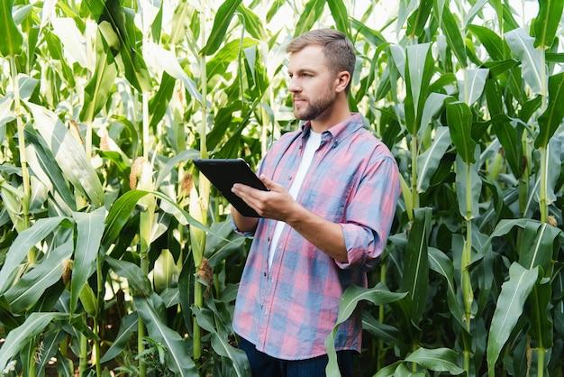 그의 농장에서 식물을 확인하는 남성 농부. 농업 비즈니스 개념, 태블릿으로 옥수수 밭에 서 있는 농업 엔지니어는 정보를 씁니다. 농업 경제학자는 작물, 식물을 검사합니다.