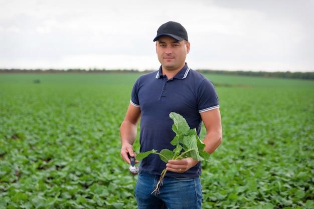 Мужчина-фермер в поле, ухаживая за посевами