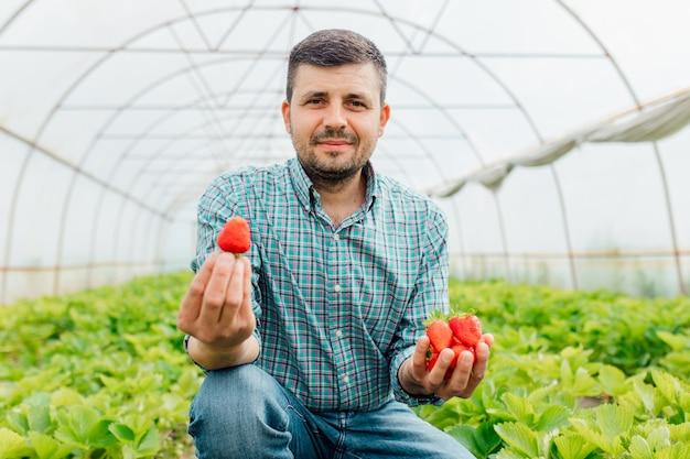 Мужчина-фермер смотрит в камеру и держит в руках большую спелую клубнику, горсть клубники летом в тепличном сельском хозяйстве и людях