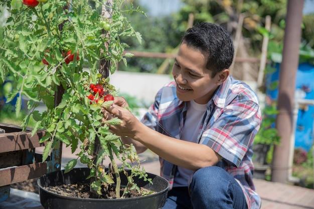 トマトを見て男性の農家