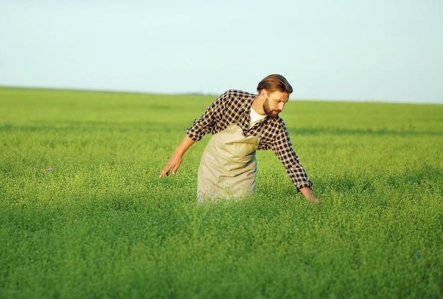 作物の成長を検査する緑の野原に立っている男性農家