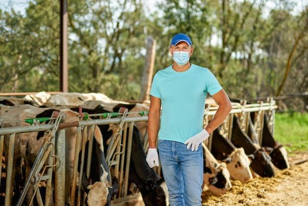 바이러스 백신 마스크를 쓴 남성 농부는 젖소가있는 농장에서 문제가 있습니다.