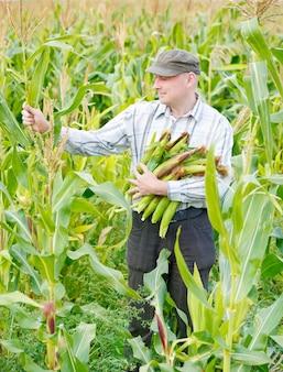 필드에 옥수수의 작물을 가진 남성 농부