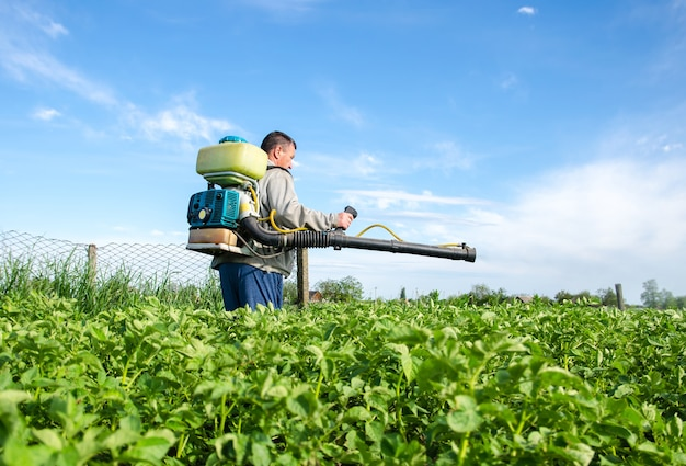 Male farmer with a mist sprayer processes potato bushes with chemicals cultivated plants