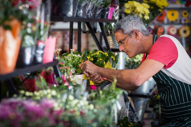 Male florist checking a flowers