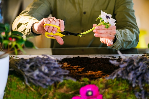 Male florist cutting a flower from a small indoors bed garden