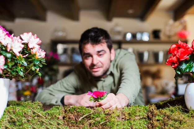 Male florist picking a flower from a small indoors bed garden