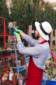 A male gardener arranging the potted plant in the rack