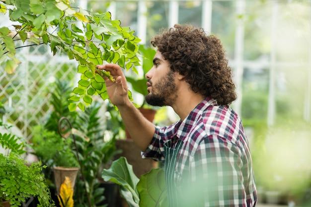 Мужской садовник, осмотр растений в теплице