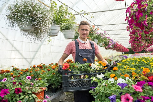 男性の庭師は、産業温室で木枠に花を運んでいます