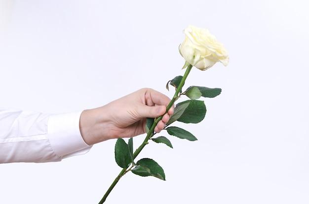 Мужская рука, держащая одну белую розу на белом фоне.