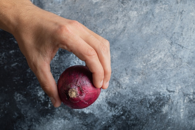 Male hand holding single red onion on marble background