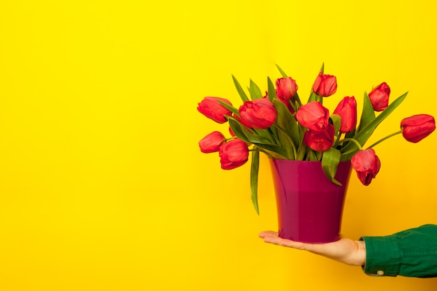 Male hand holds a vase, a pink pot with a bouquet of red tulips