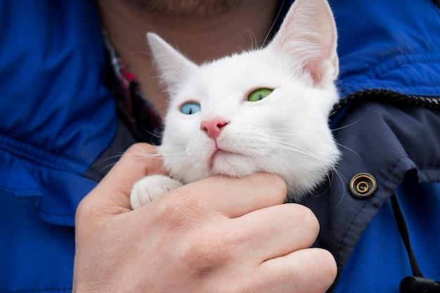 파란색과 녹색 눈을 가진 그의 가슴에 흰 고양이를 들고 파란색 재킷에 남성 손.