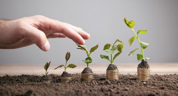 植物とコインの男性の手のスタック。