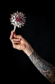 Мужская рука с сухим цветком артишока изолирована