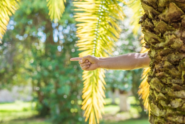 Male hand with index finger pointing to the right from behind a palm tree