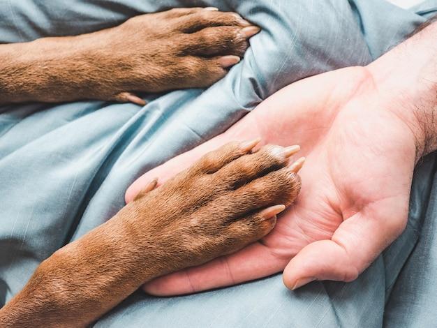남성의 손과 강아지의 발. 클로즈업, 실내, 위에서 볼 수 있습니다. 돌봄, 교육, 복종 훈련, 애완 동물 기르기의 개념
