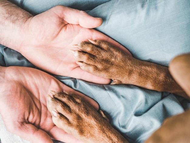 남성 손과 강아지의 발