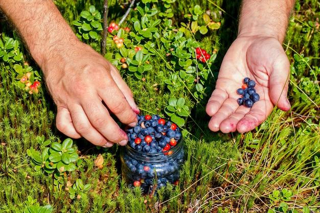 수컷 손은 숲 사이의 빈터에 있는 유리병에 신선한 블루베리와 크랜베리를 수집했습니다.