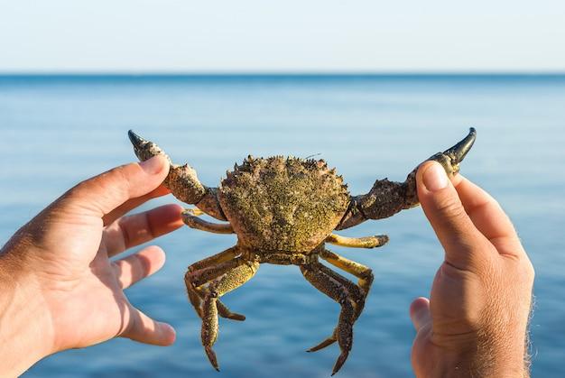 바다를 배경으로 큰 살아있는 게를 들고 있는 수컷 손