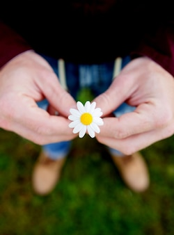 Male hands holding a cute daisy flower