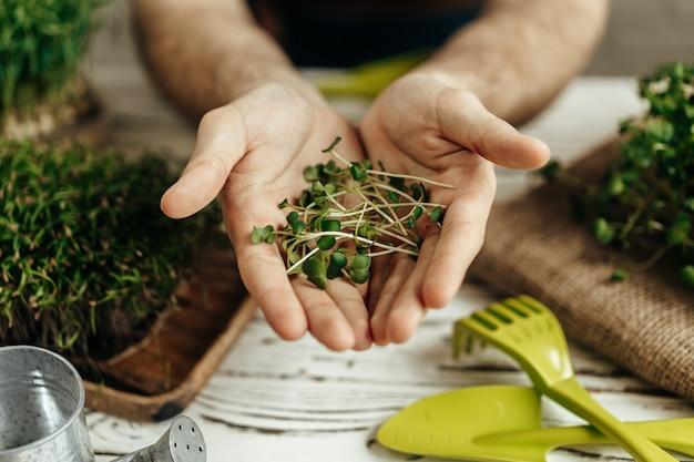 白い木製のテーブルの上にマイクログリーンの葉を保持している男性の手