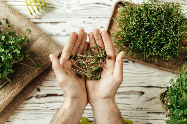 Мужские руки держат листья микрозелени над белым деревянным столом