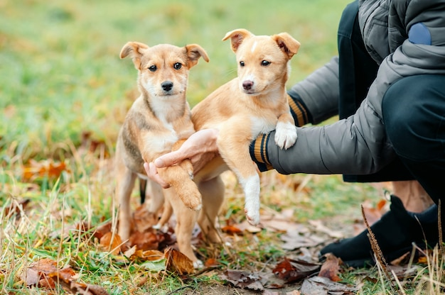 Male hands holding two homeless abandoned puppy dog.