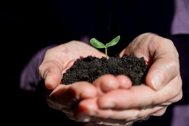 若い植物を保持している男性の手。生態学の概念。若い木が付いている土を保持している手。アースデイ土壌で育つ苗木地球温暖化を抑えるために植樹する地面から発芽する新しい苗木