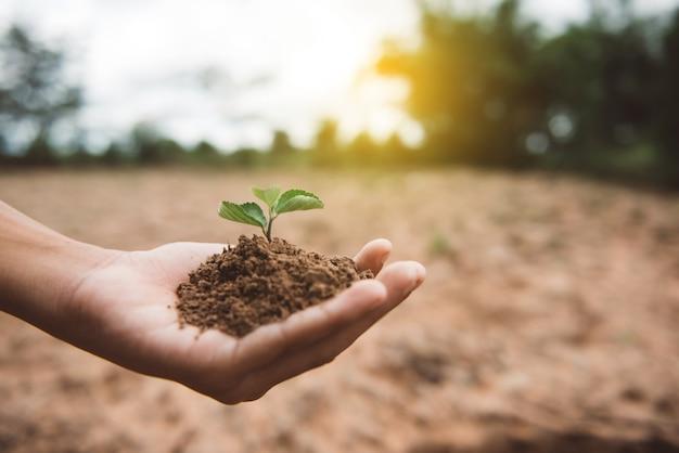 남성 손 심기 젊은 나무. 자연 배경 생태 환경 개념