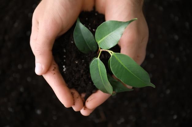 녹색 식물과 토양으로 남성 손