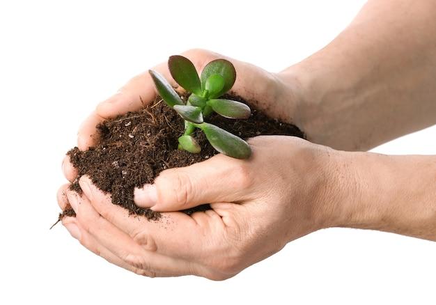 흰색 표면에 식물과 토양 남성 손. 지구의 날 축하