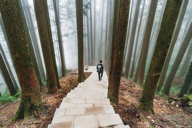 Male tourist walking down the stone stair in the japanese cedar forest
