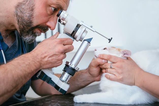 Male veterinarian using a sight measure optometry machine on a blind cat. ocular care for elderly cats.