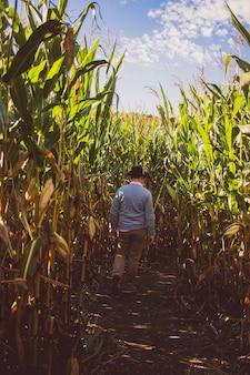 背景の青い空と晴れた日にトウモロコシ畑を歩く男性