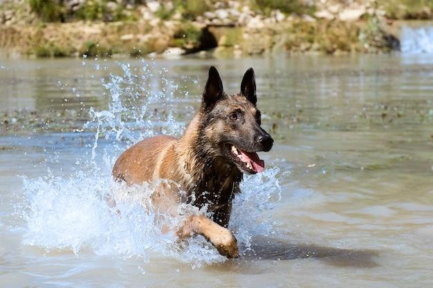 Малинуа в реке