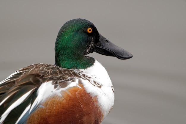 Mallard duck near the lake during the daytime