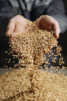 麦芽が手に負えない
